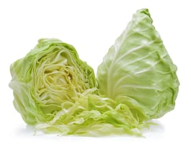 CABBAGE - POINTED
